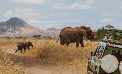 Un safari n'est pas un voyage comme les autres ...