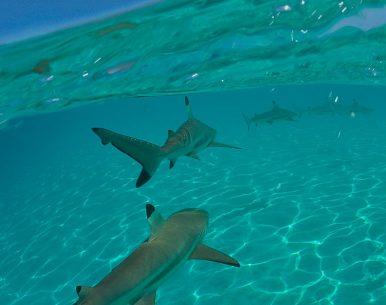 """Découverte du """"Mana"""" tahiti et ses îles"""