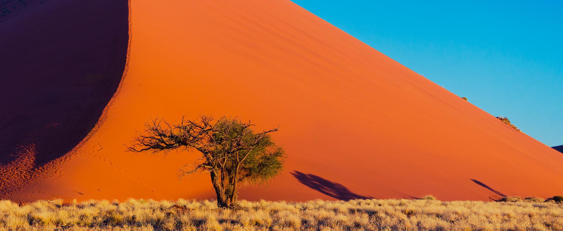 Désert et safari en terre préservée