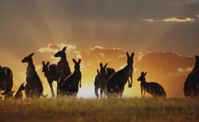 grandiose australie