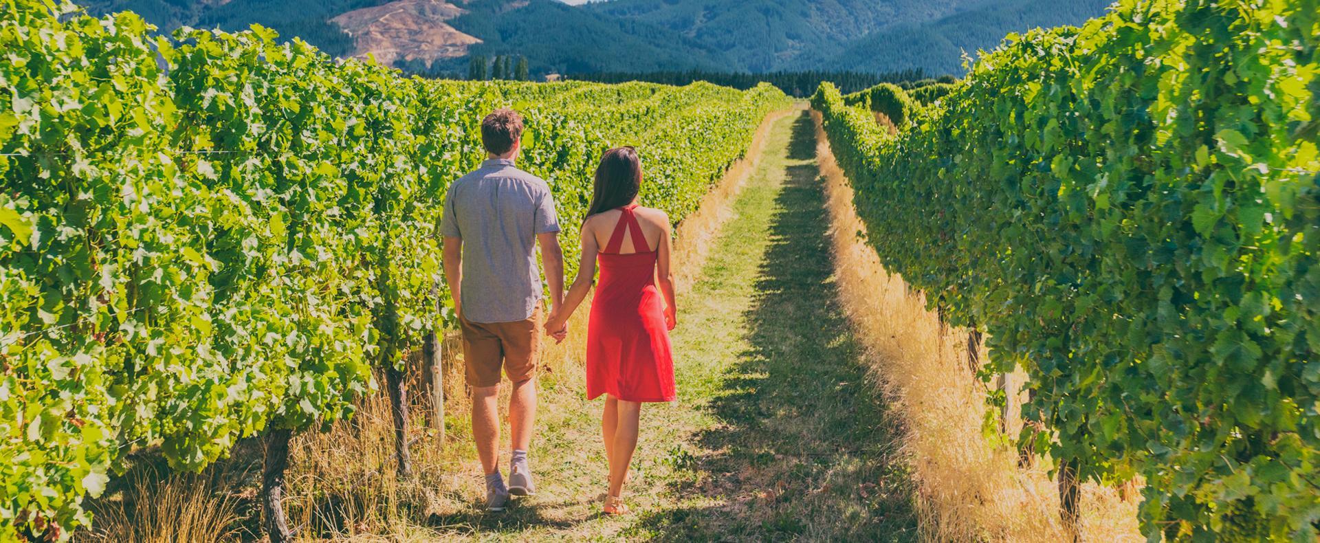 La route des vins californiens